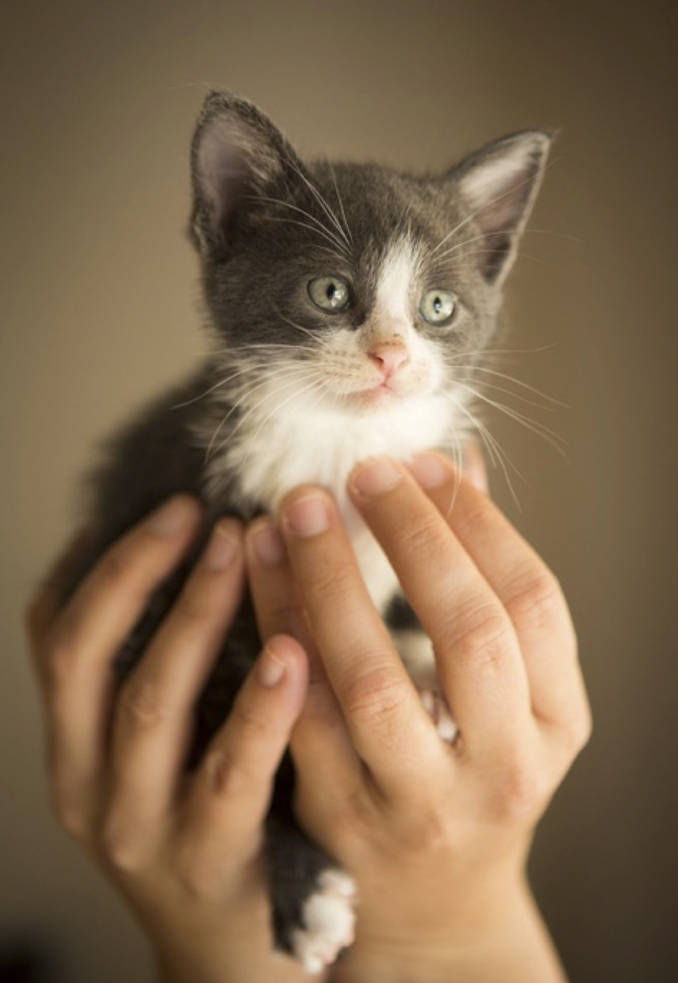 kitten veritcal