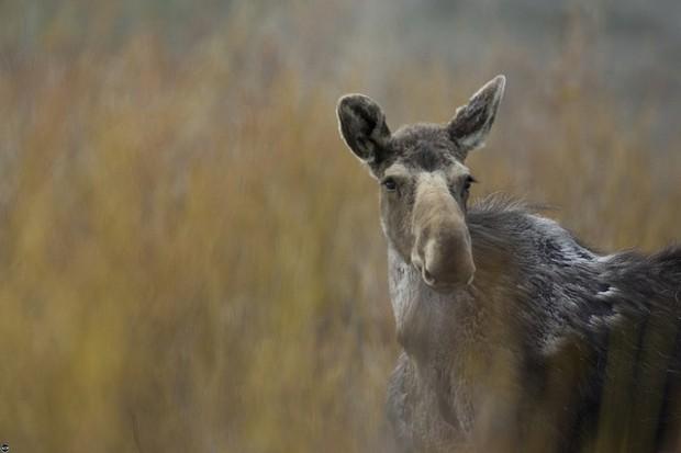 Wendy Shattil/Bob Rozinski - International League of Conservation Photographers