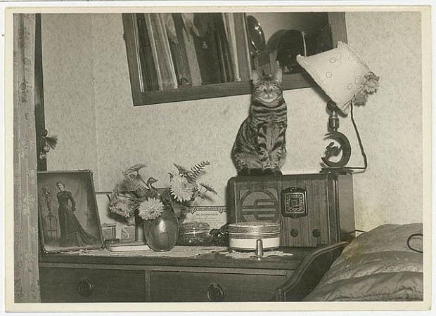 old cat pictures