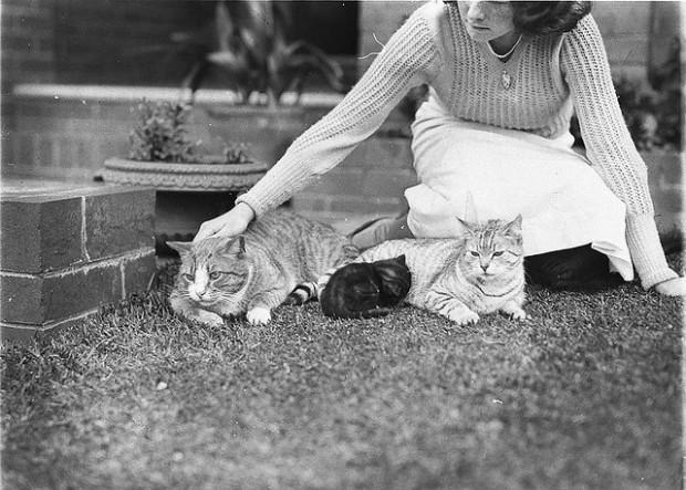 vintage cat photos