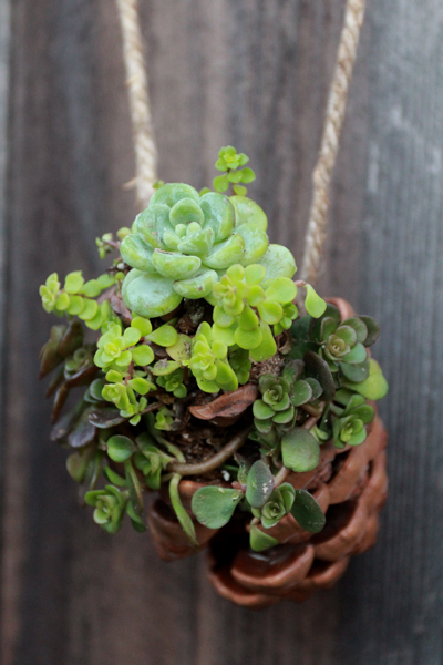 diy succulent craft idea