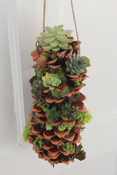 succulent craft idea