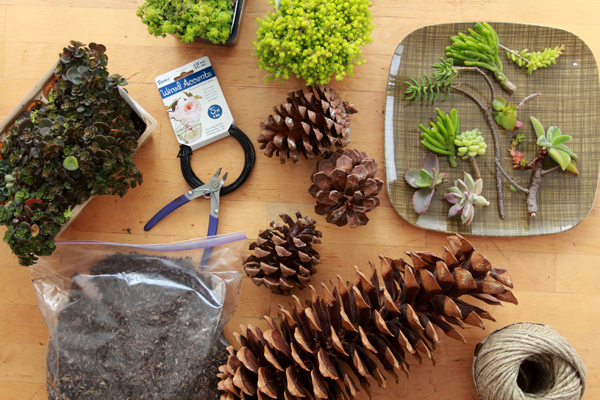 pinecone craft idea