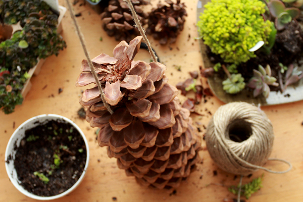 pinecone craft diy