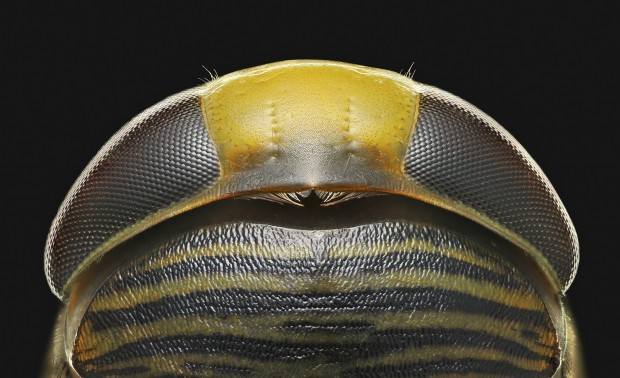 Beyond Macro Photography to Micrography Pro Charles Krebs on Developing Your Skills