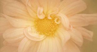 Creating_Painterly_Photos_WEB_1600x900
