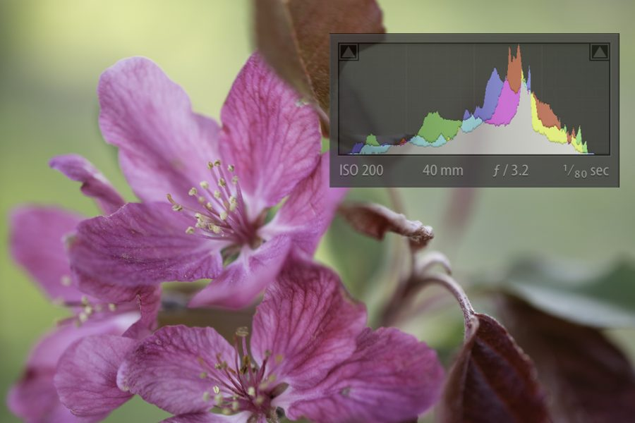 How to Read a Histogram (Without Getting a Headache)