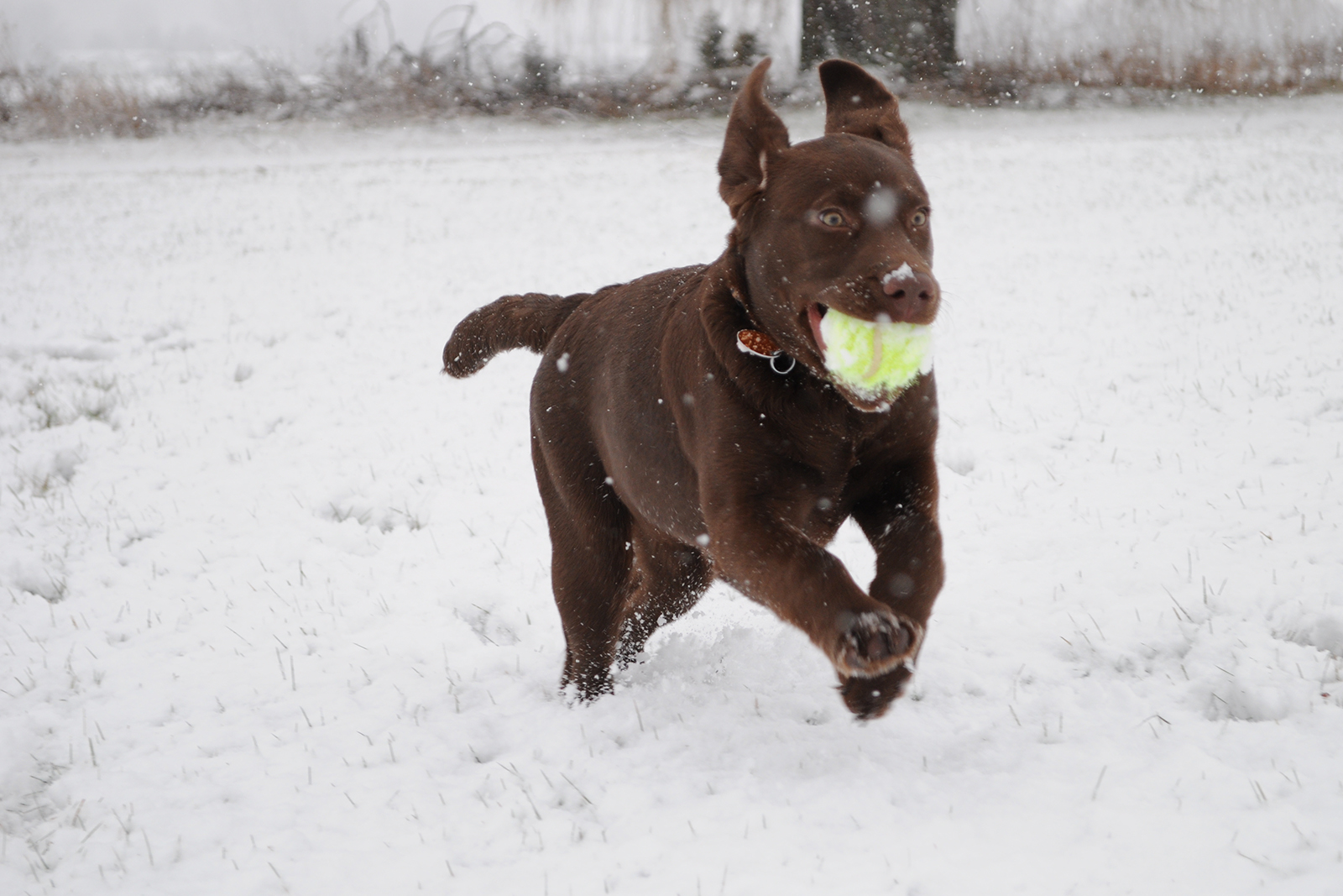 7 Pet Photography Tips For Better Photos of Four-Legged Family